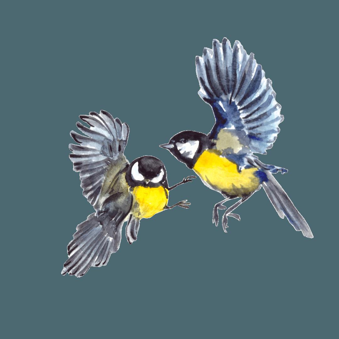 12. Gli uccelli