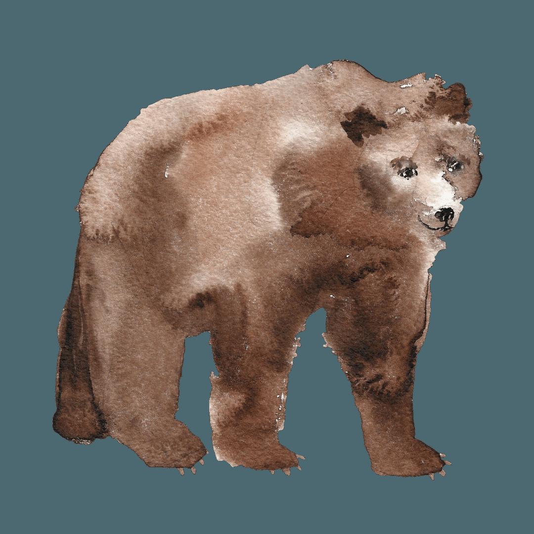 15. L'orso