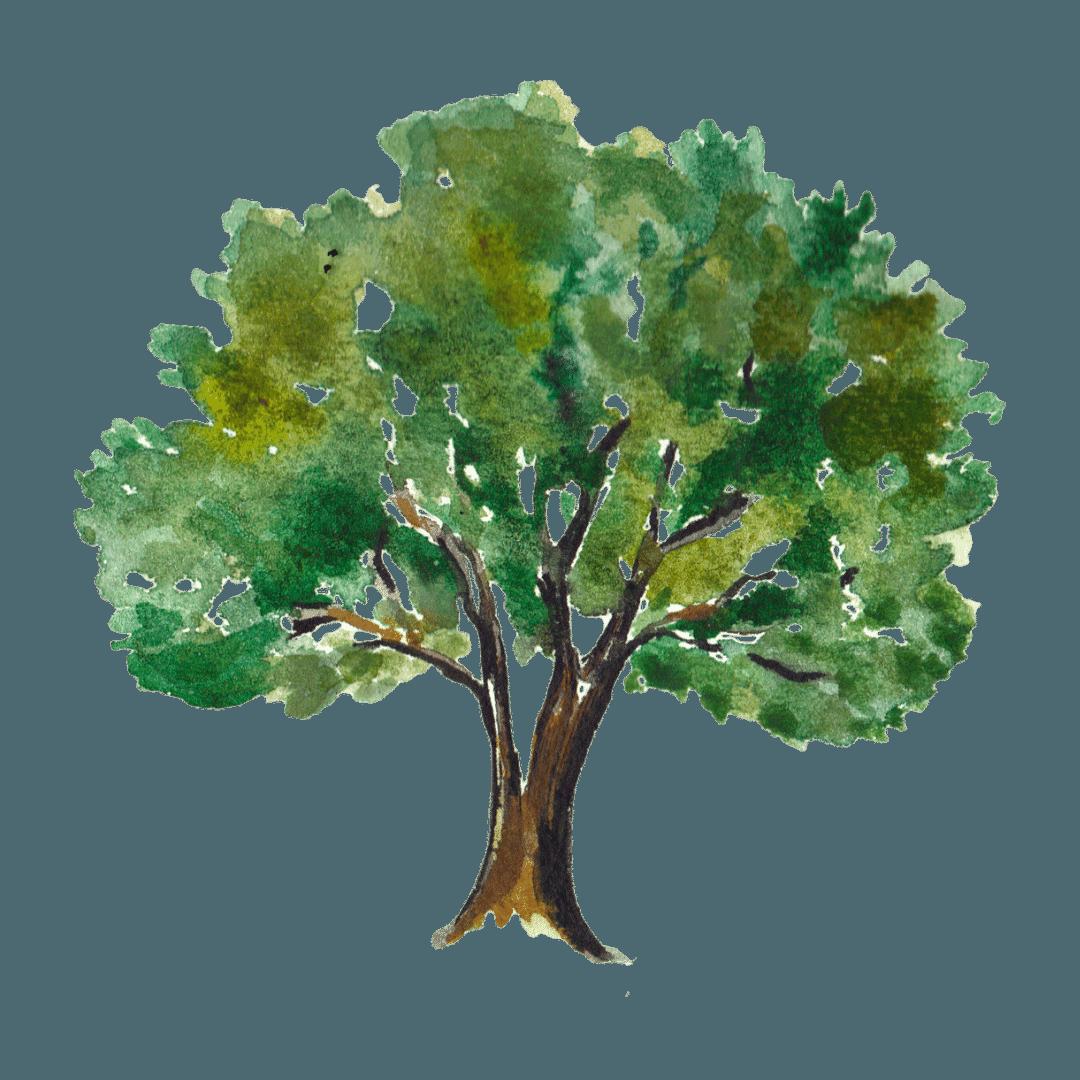5. L'albero